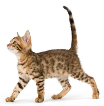 Slim cats are healthier cats.