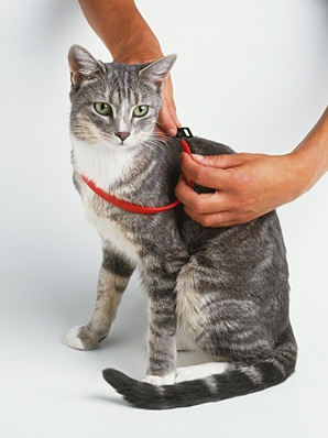 Flea collars can be toxic to your pet.