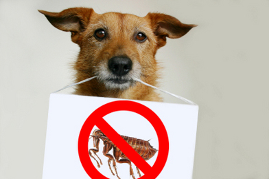 Ban fleas from your pet's life! But use natural flea prevention and not toxic chemicals.