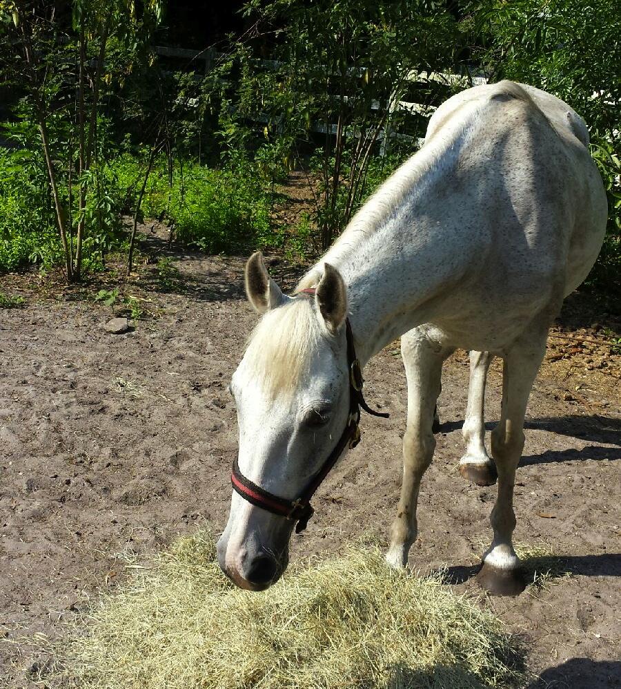 A-Kris-F-horse1.jpg