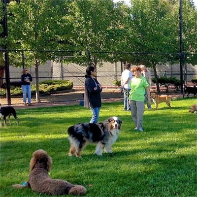 Dog parks: attentive owners make for a peaceful park. photo: inmenlo.com