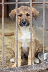 Choosing a pet from a rescue shelter or humane society gives a neglected pet a forever home.