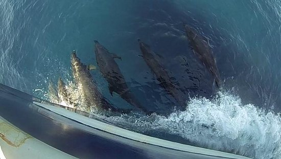 San Diego Bay scenic tours aboard Mai Tai