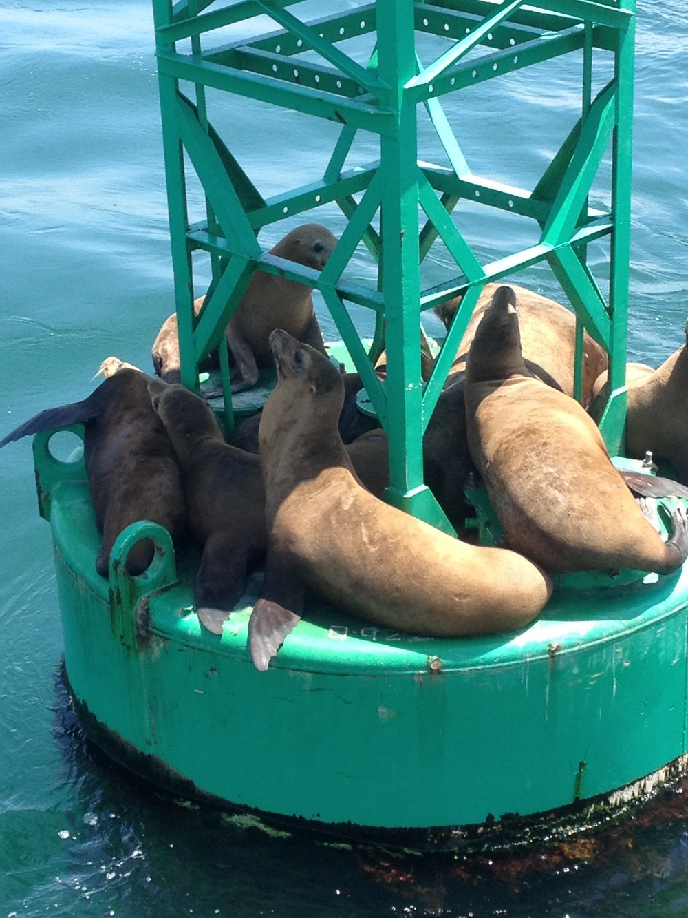 Sea Lions aboard San Diego Yacht Charter Mai Tai