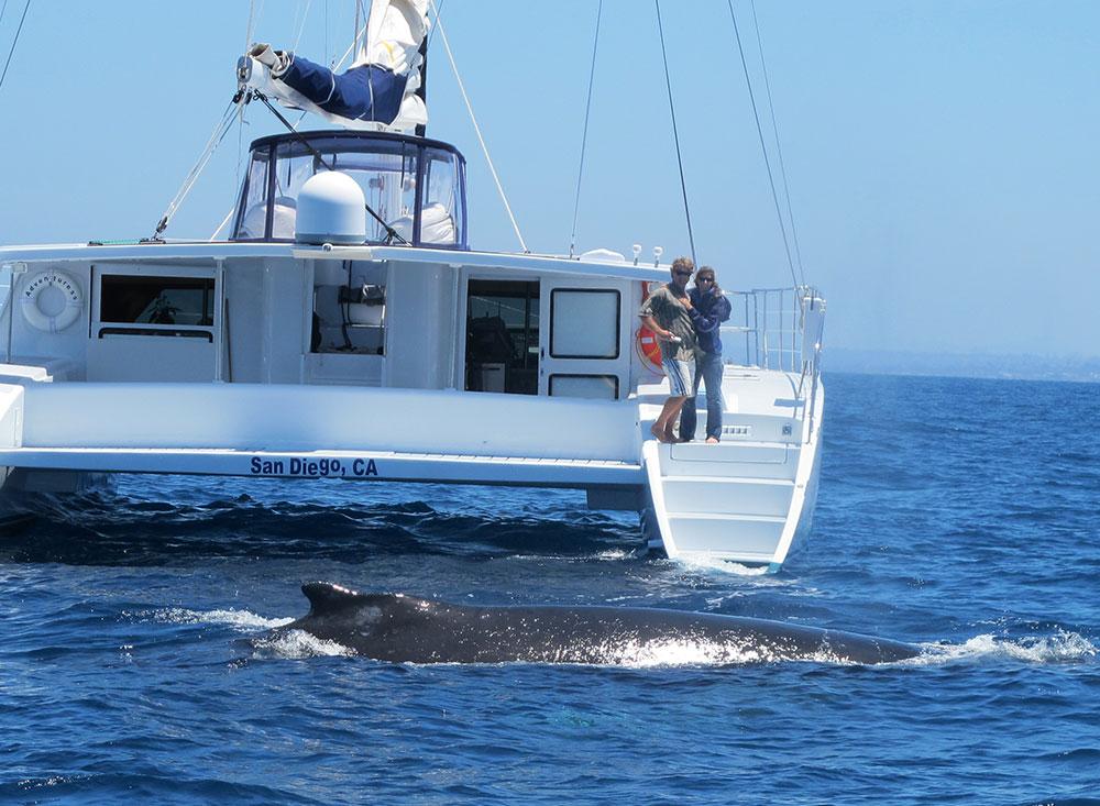 humpback-whale.jpg