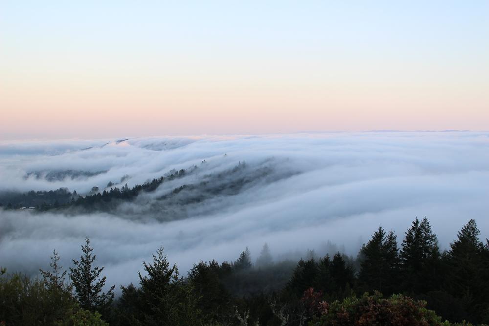 North Bay fog