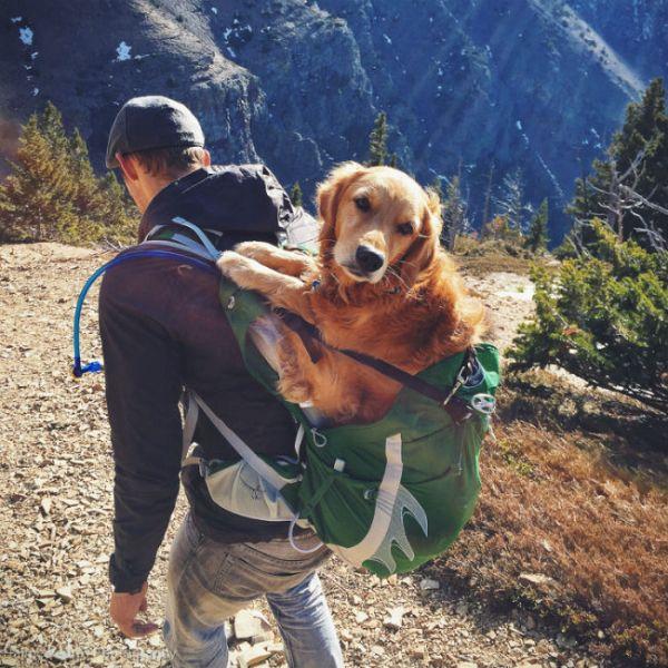 Can Dogs Walk Backwards