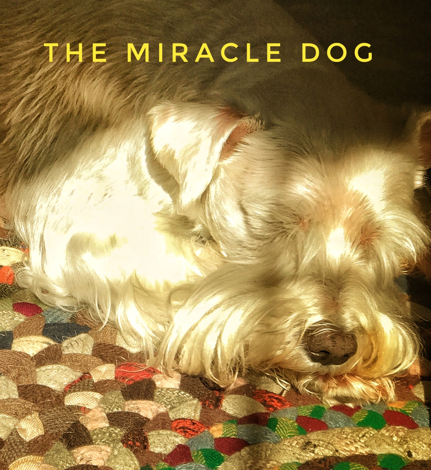 The Miracle Dog — Peace Matters