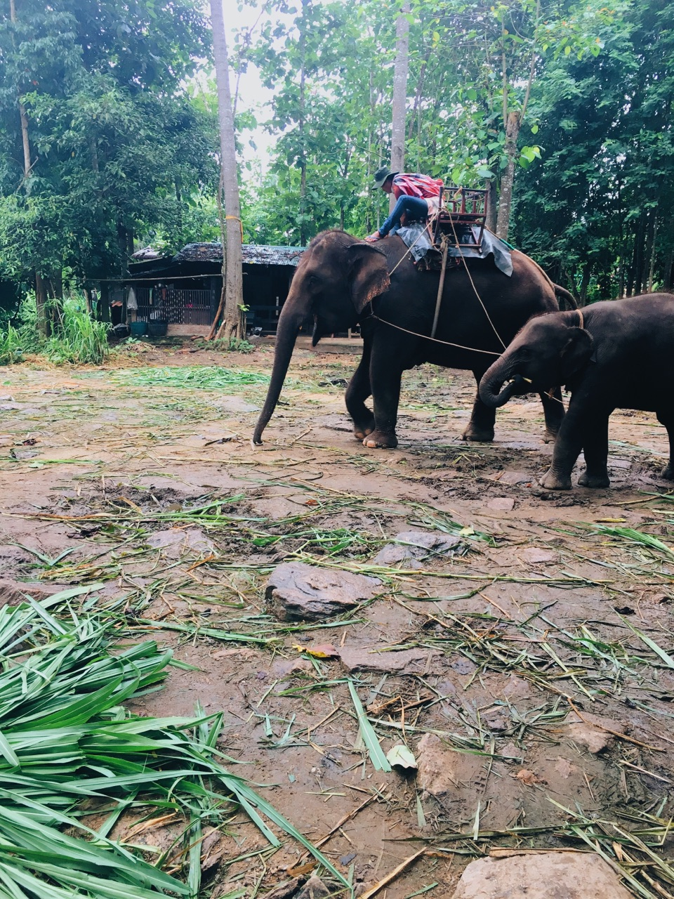 Thailand: Photo via  Mel_928