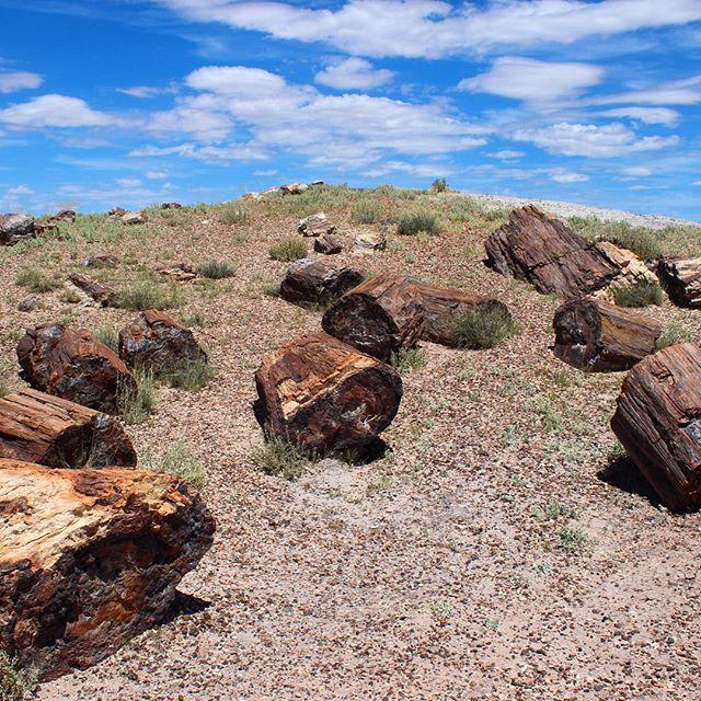 Petrified Forest National Park. A beautiful example of protection for unique desert landscapes, as well as historic Route 66. #saveroute66 #mojavetrails