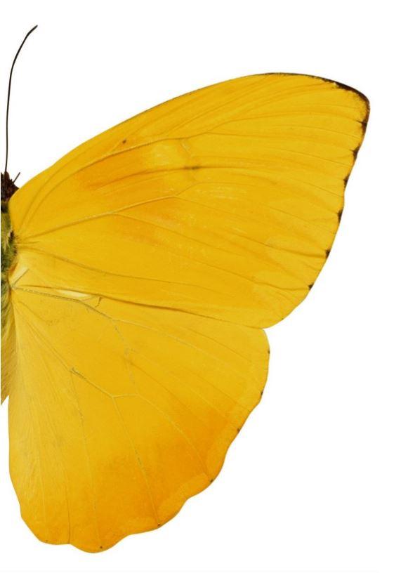wing jpg.JPG