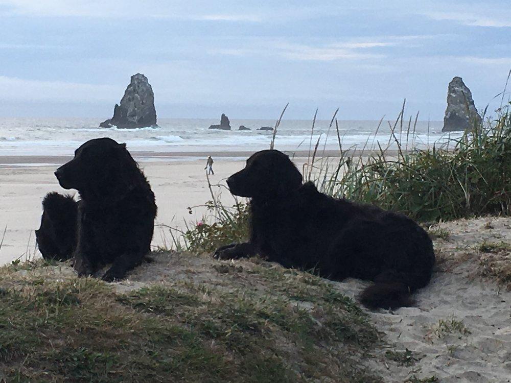 Bonus image! Lisa's dogs.
