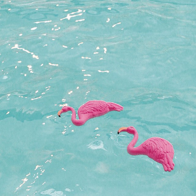 🌴🏄🏽Sign of a good time  #pinkflamingo #pool #rockaways #laborday #cleanshave #yaaasss