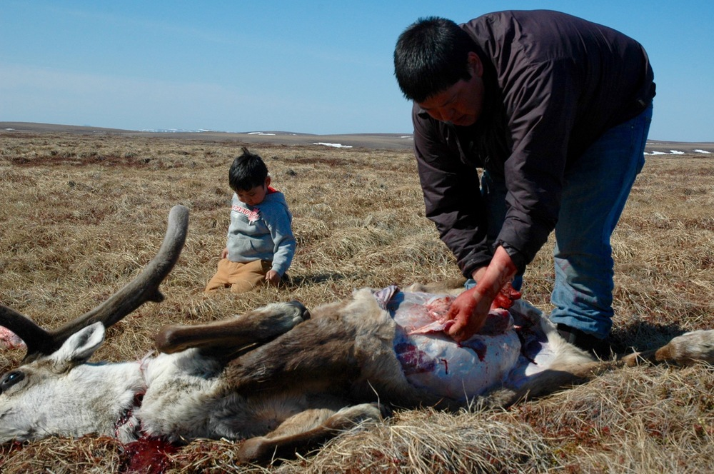 4. cutting caribou, pulling grass.jpg