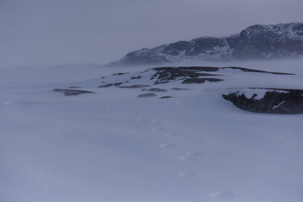 South Aulatsivik 2017 - 12.jpg