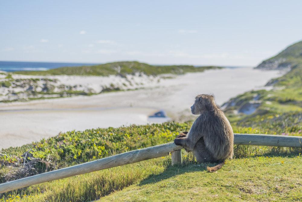 Cape Point On The Tee Depositphotos_100995062_l-2015.jpg