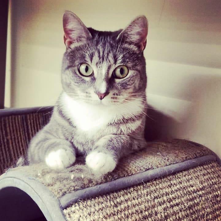 Nina - Adopted!