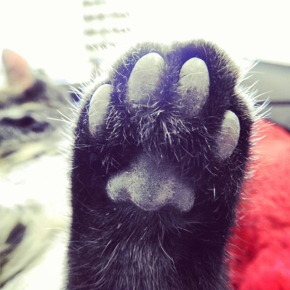 Brace yourselves! An awesome paw alert!!!
