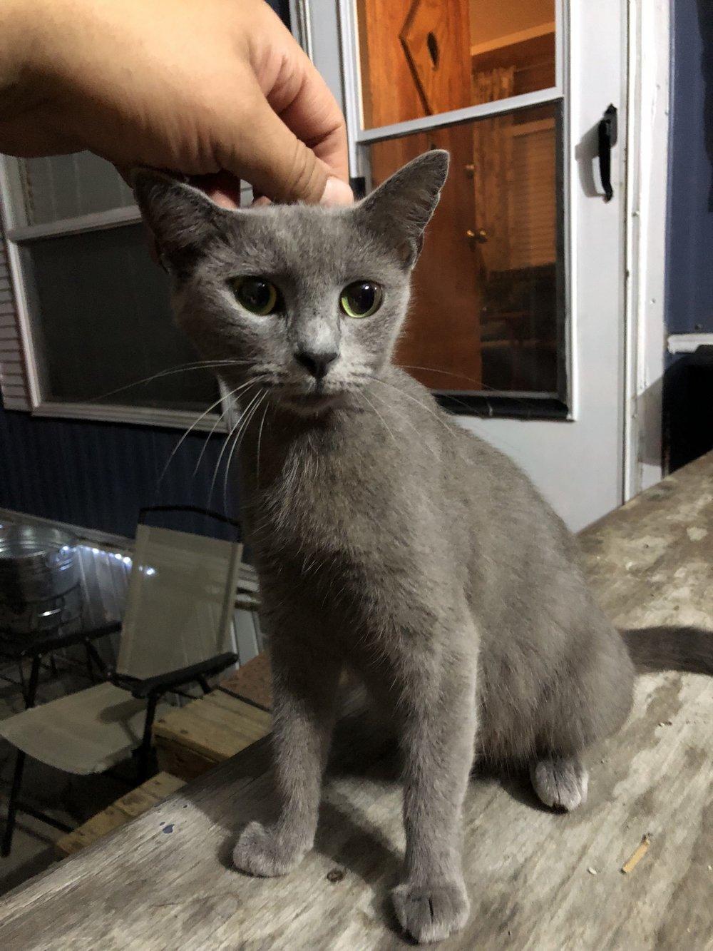 Princess Adopted January 2019
