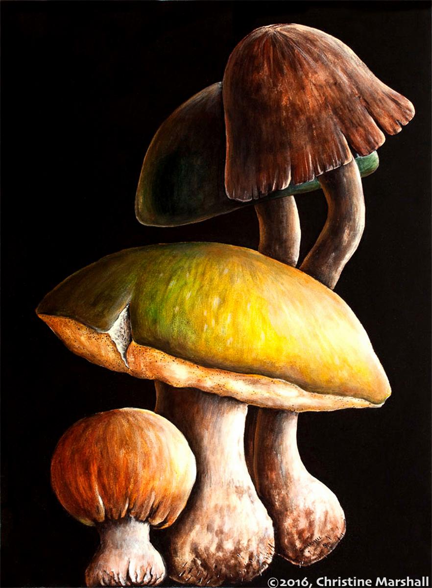 ChristineMarshall-Mushroom grouping- Smaller.jpg