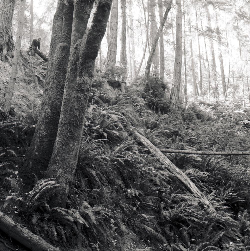 WAforest.jpg