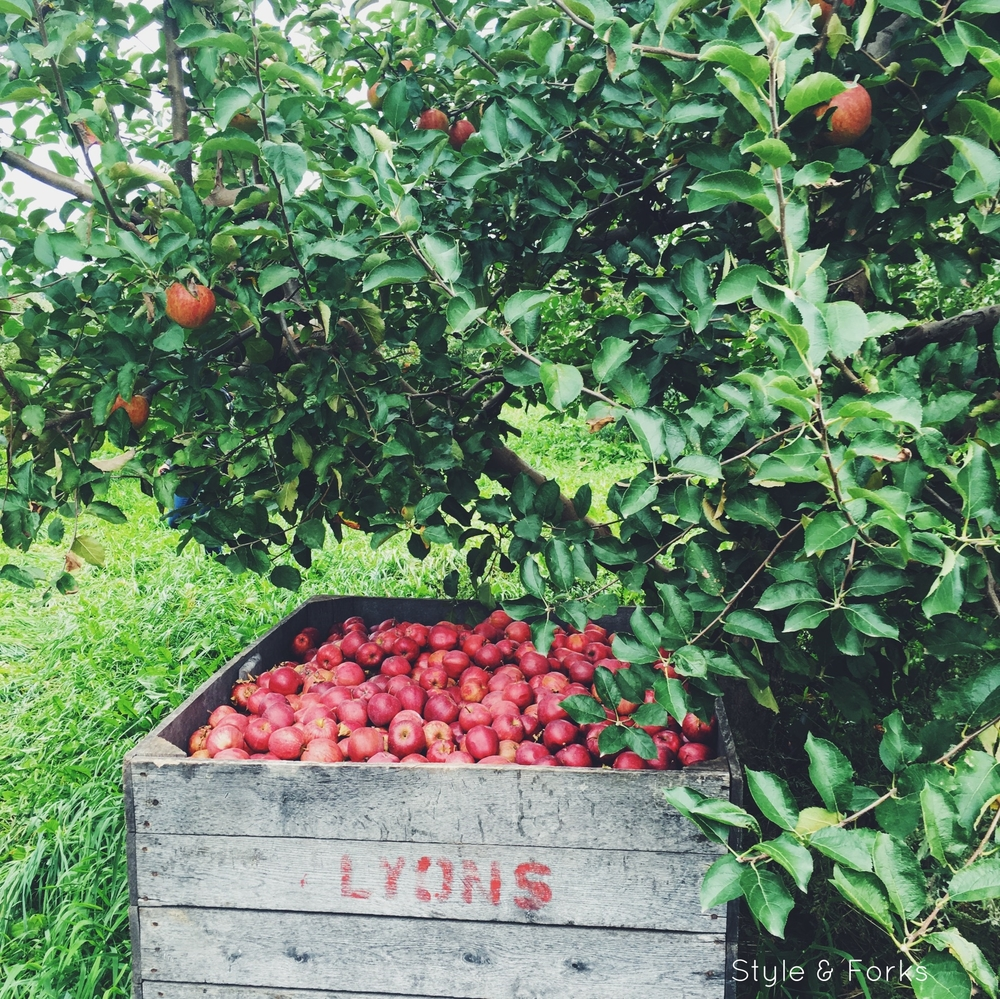 All the Apples