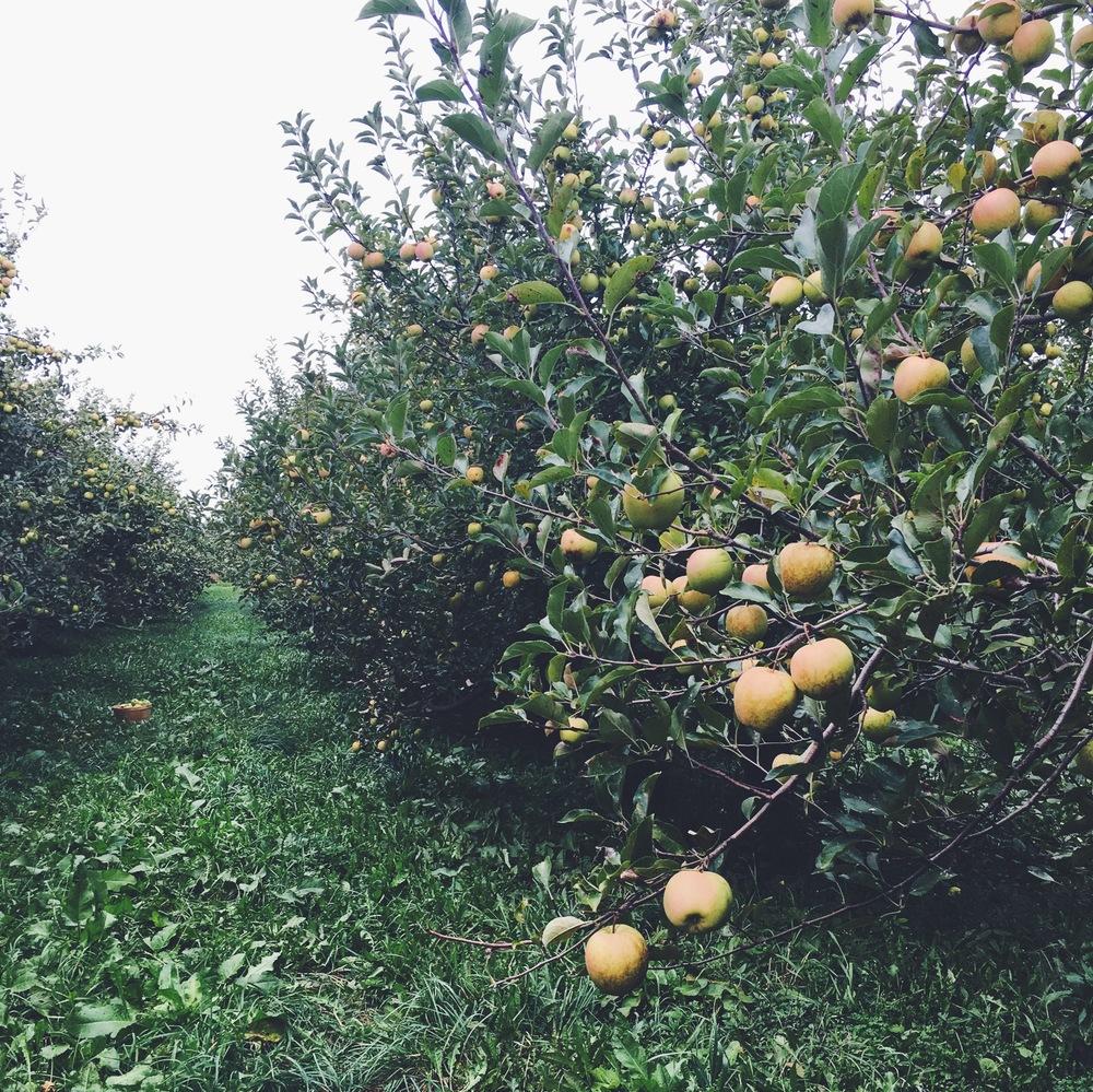 More beautiful apples