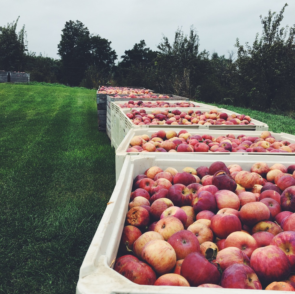 Apples for days