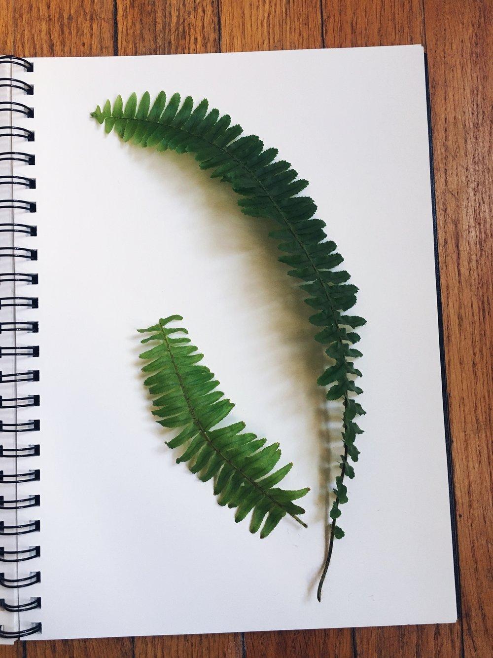 Style & Forks: Pressed Plant DIY