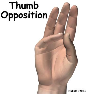 Opposition Stretch