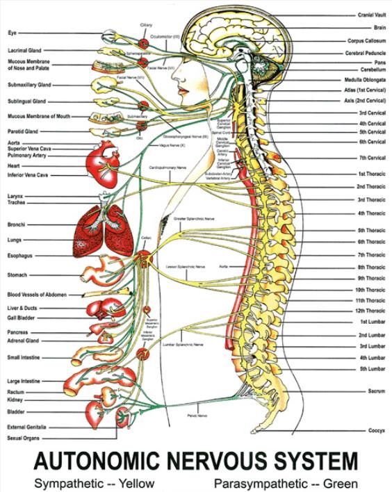 Image credit: Sherman College of Chiropractic - www.sherman.edu