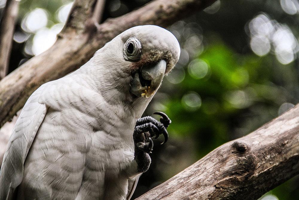 Cheeky Bird.jpg