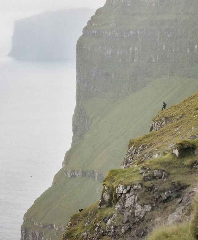 Some sheep are less cooperative than others, this one just happens to be black. Surrounded by sheer cliffs, a Faroese shepherd contemplates the best way to convince his wayward sheep on the ledge below to rejoin the flock. #faroeislands #visitfaroeislands #viðoy #blacksheep