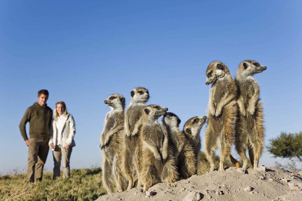 Meerkats 5 copy.jpg