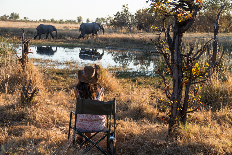 janaina matarazzo_watching elephants.jpg