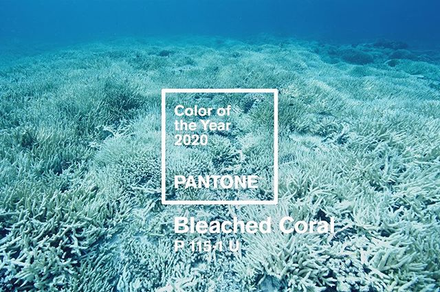 COLOUR OF THE YEAR: In December 2018, Pantone announced their 2019 colour of the year.  The colour is meant to guide, inspire, and shape the world of design (and beyond), while reflecting the state of the world as we know it. The rich tapestry of a single year, distilled into a single colour.  The colour they chose for 2019 was PANTONE 16-1546 Living Coral.  The health of coral is a key indicator for the condition of the ocean.  In 2016, climate change caused unprecedented mass coral bleaching in the Great Barrier Reef, the largest living organism in the world.  This was followed by another mass bleaching in 2017, resulting in a 30% loss of coral in 2016, and a further 20% in 2017, with incalculable damage done to the ecosystems that inhabit it.  While we wait for the 2018 statistics to come in, Pantone's 2019 colour of the year feels tone-deaf, and downright irresponsible.  We have a better idea.  Pantone's 2020 Colour of the Year is PANTONE P 115-1 U Bleached Coral.  A brand as influential as Pantone should take a stance on the issues facing society, like climate change, using their voice to speak to creators in every industry.  Imagine if the creative community at large brought Bleached Coral from the depths of the ocean, straight to the clothes we wear, the products we buy, and the media we consume.  Imagine if Pantone's Colour of the Year was as widespread and impactful as climate change itself.  Imagine if a colour could save the world.  #🐠 #pantone #livingcoral #bleachedcoral #coral #colour #coralreef #coloroftheyear #colouroftheyear #pantonecoloroftheyear #coy2019 #coy2020 #climatechange #globalwarming #graphicdesign #graphiccontent #jackandhuei