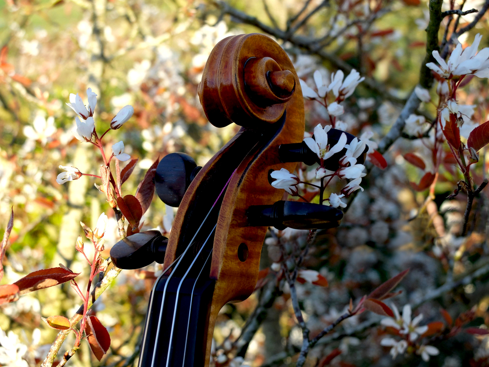 FIDDLE AMELANCHER PHOTOSHOPPED 2 BY JMcK.jpg
