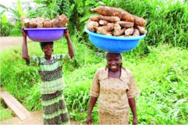 Nigerian Cassava Farmers: http://thenationonlineng.net/tackling-cassava-farming-challenges/
