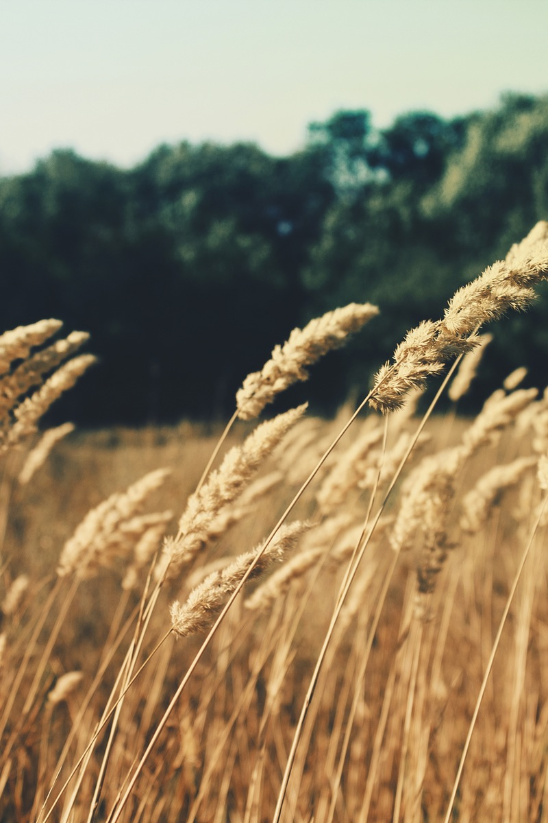 nature-field-summer-agriculture.jpg