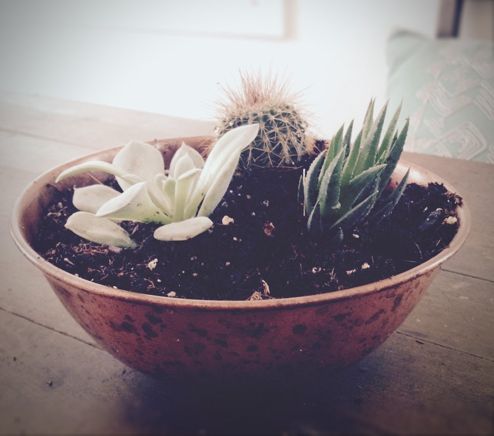 3 Simple Ways to Become Successful with Plant Care: A Beginner's Guide