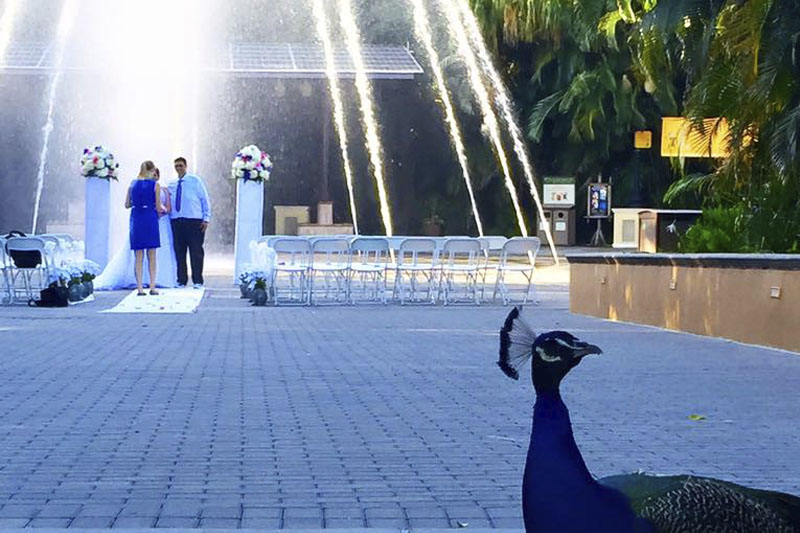Palm Beach ZOO Wedding