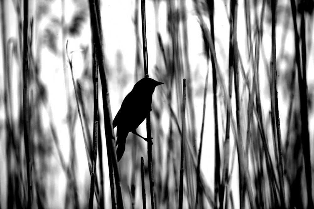 BirdSong2_AnneAnthony.jpg