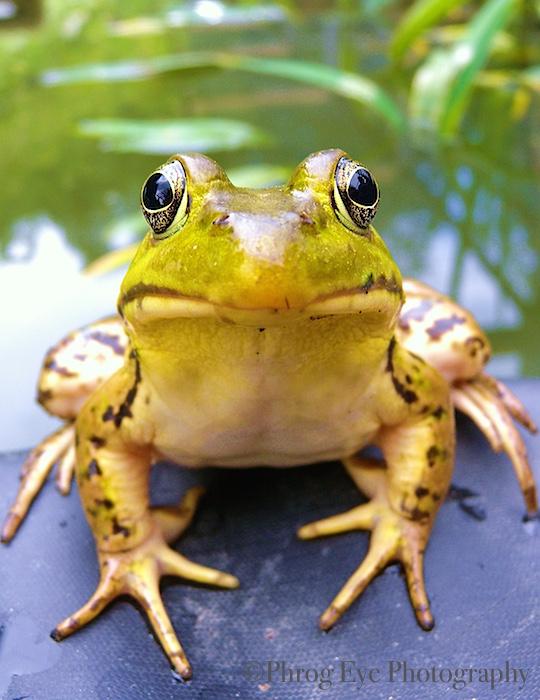 1. I Am Frog.jpg