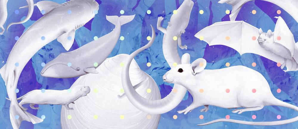 animals-elysiumjpg