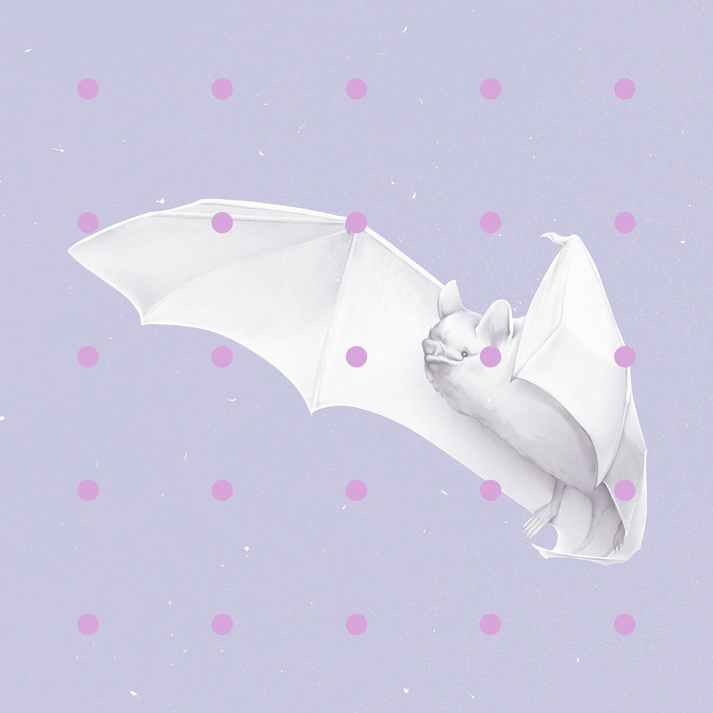 bat_hi.jpg