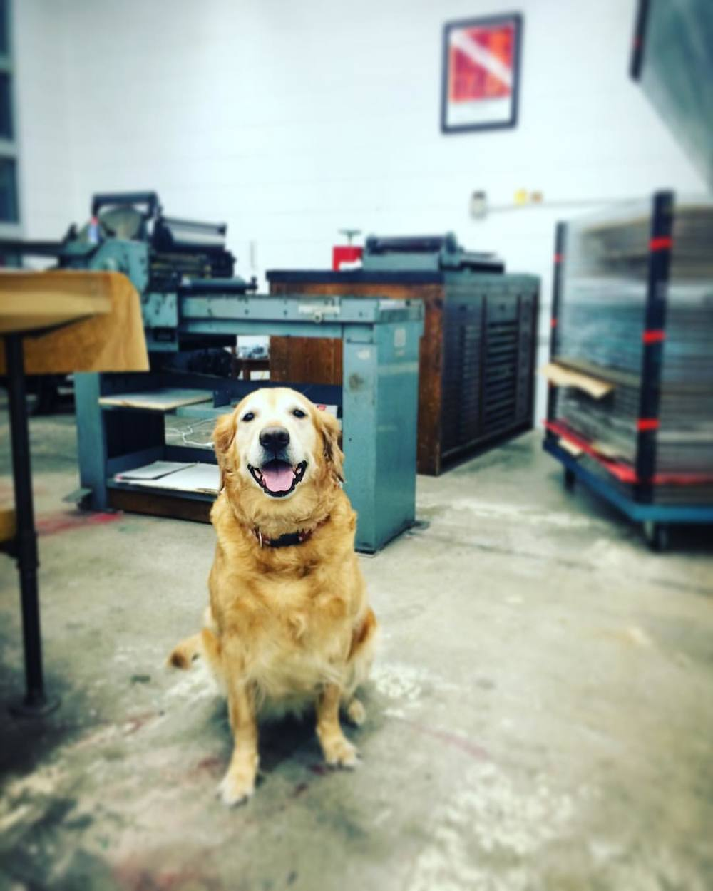 the best letterpress printing assistant ever, Ms. Bettie Bee.