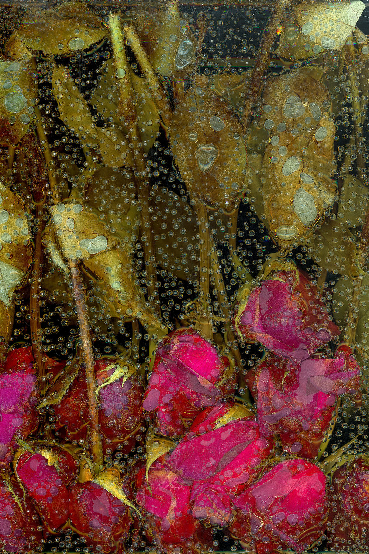 victoria marie bee, la petite mort,2016 [click on image for fullscreen]