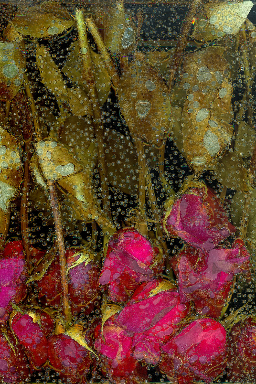 Victoria Marie Bee,le petite mort,pigment print, 2016