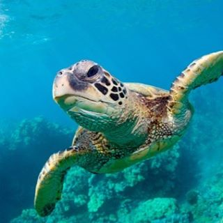 Ditch single use plastic bags and save sea turtles.