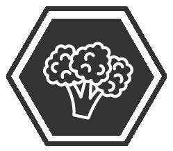 broccoli hex-01.png
